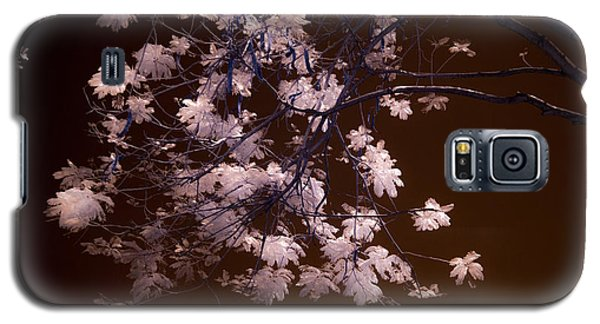 Florida Spring Galaxy S5 Case