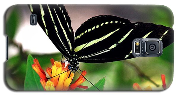 Florida State Butterfly Galaxy S5 Case