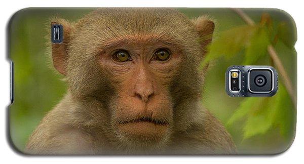 Florida Wildman Galaxy S5 Case