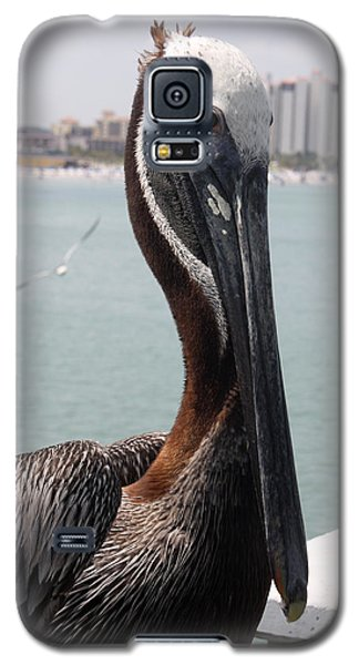 Galaxy S5 Case featuring the photograph Florida's Finest Bird by David Nicholls