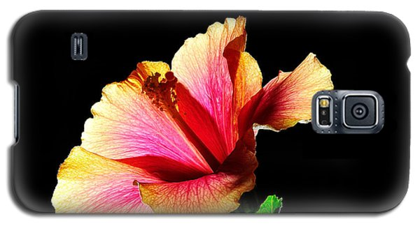 Flower At Night Galaxy S5 Case by Marwan Khoury