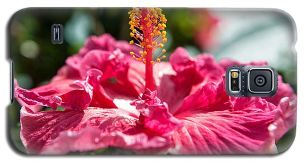 Flower Closeup Galaxy S5 Case
