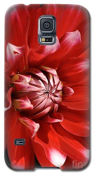 Flower- Dahlia-red-white Galaxy S5 Case
