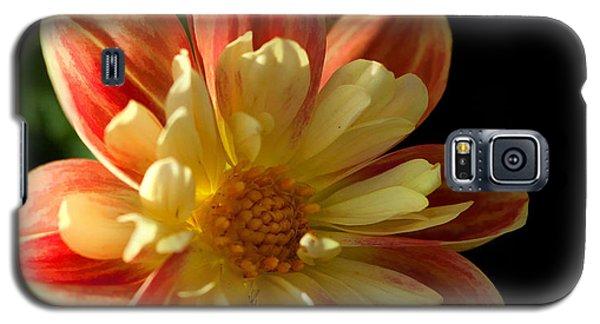Flower In The Sun Galaxy S5 Case by Cherie Duran