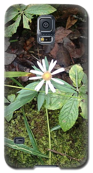 Flower In The Woods Galaxy S5 Case by Robert Nickologianis