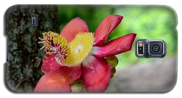 Flower Of Cannonball Tree Singapore Galaxy S5 Case