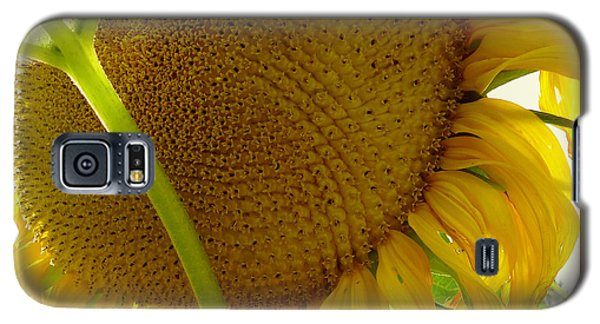 Flower Of The Sun Galaxy S5 Case