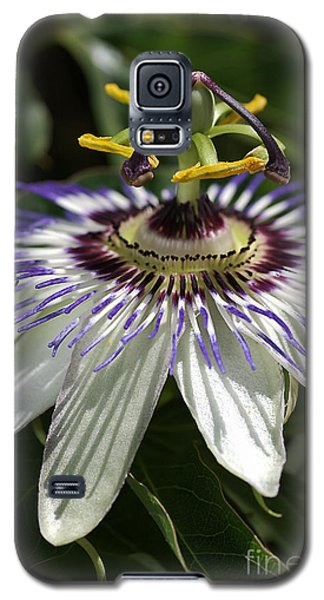 flower-Passionfruit Galaxy S5 Case