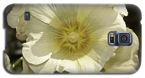 Flower Petals Of A White Flower Galaxy S5 Case