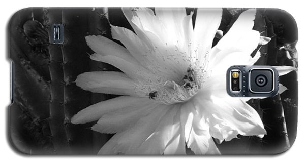 Galaxy S5 Case featuring the photograph Flowering Cactus 1 Bw by Mariusz Kula