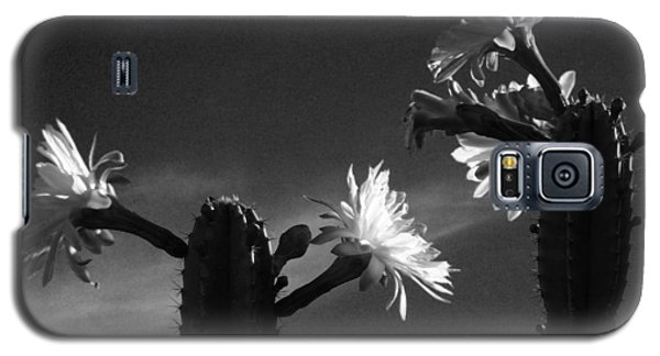 Flowering Cactus 4 Bw Galaxy S5 Case