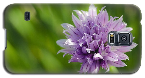 Flowering Chive Galaxy S5 Case