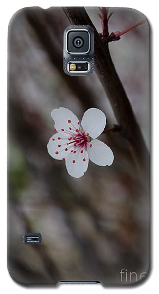 Flowering Plum 3 Galaxy S5 Case