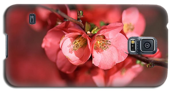 Flowering Quince Galaxy S5 Case