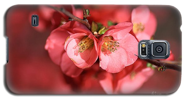 Flowering Quince Galaxy S5 Case by Joy Watson