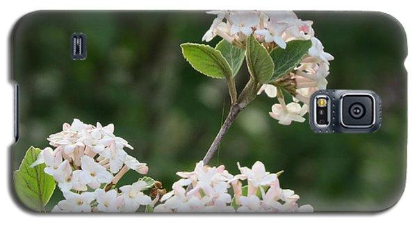 Flowering Shrub 3 Galaxy S5 Case