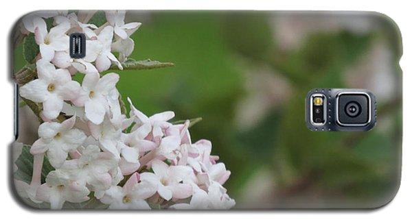 Flowering Shrub 4 Galaxy S5 Case