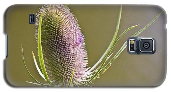 Flowering Teasel. Galaxy S5 Case