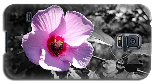 Flowering Galaxy S5 Case by Tom DiFrancesca