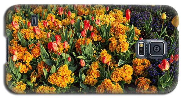 Flowers In Hyde Park, City Galaxy S5 Case