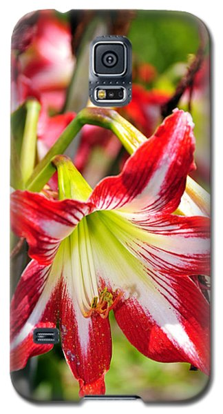 Galaxy S5 Case featuring the photograph Flowers In The Summer by Davina Washington