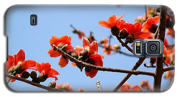 Flowers Of The Red Silk Cotton Tree Galaxy S5 Case by Yali Shi