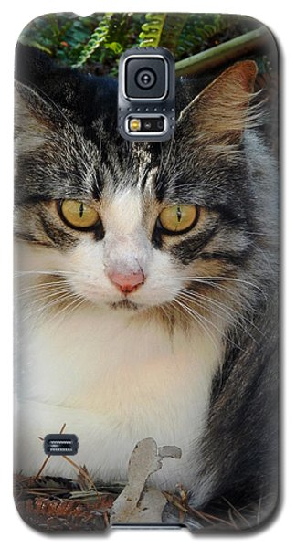 Fluffy Cat Galaxy S5 Case by Pamela Walton