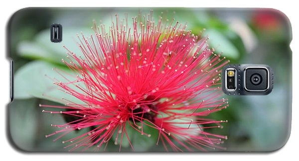 Galaxy S5 Case featuring the photograph Fluffy Pink Flower by Sergey Lukashin