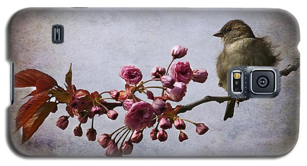 Fluffy Sparrow  Galaxy S5 Case by Barbara Orenya