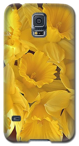 Flurry Of Daffodils Galaxy S5 Case by Diane Alexander