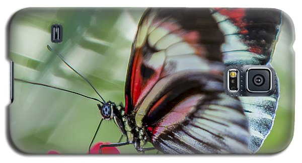 Fluttering Piano Key Butterfly Galaxy S5 Case