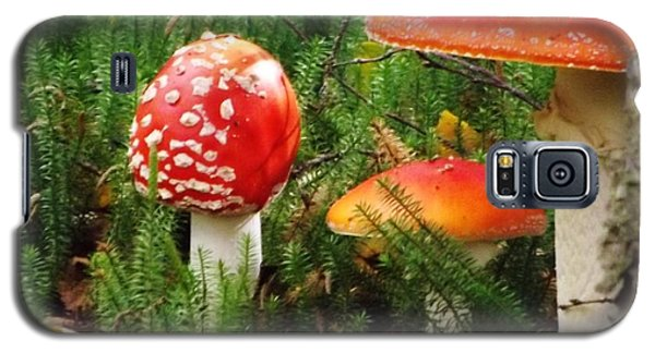 Galaxy S5 Case featuring the photograph Fly Agaric Mushroom by Brigitte Emme