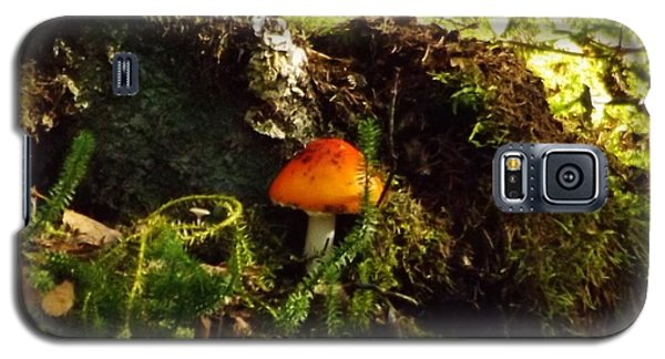 Galaxy S5 Case featuring the photograph Fly Agaric Mushroom On Forest Floor by Brigitte Emme