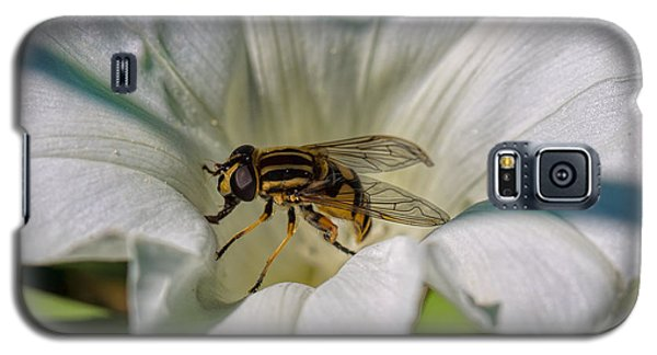 Galaxy S5 Case featuring the photograph Fly In White Flower by Leif Sohlman