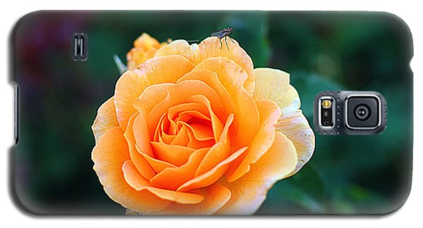 Galaxy S5 Case featuring the photograph Fly On A Rose by Kevin Ashley