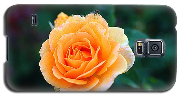 Fly On A Rose Galaxy S5 Case by Kevin Ashley