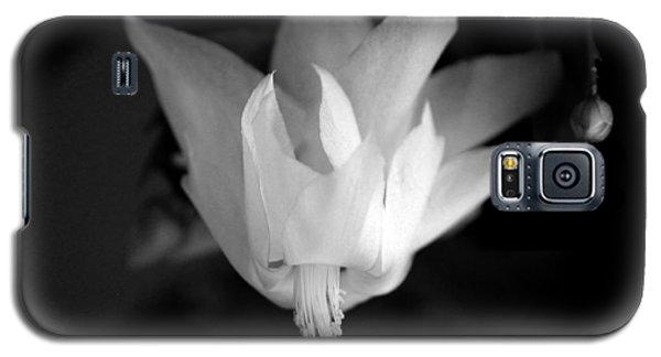 Flying Cactus Galaxy S5 Case by Silke Brubaker