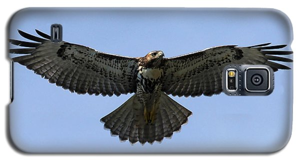 Flying Free - Red-tailed Hawk Galaxy S5 Case