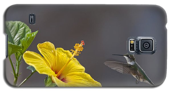 Flying In For A Quick Meal Galaxy S5 Case by Robert Camp