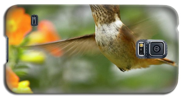 Flying Scintillant Hummingbird Galaxy S5 Case