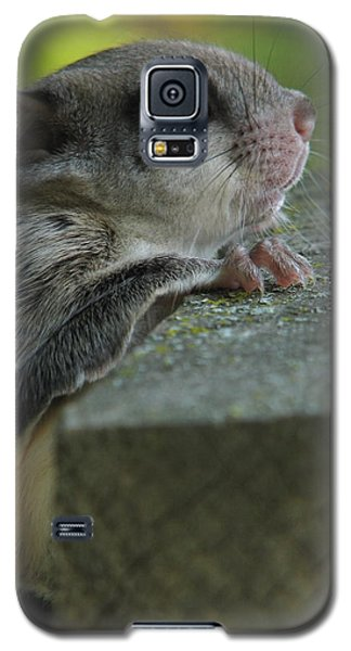 Flying Squirrel Galaxy S5 Case