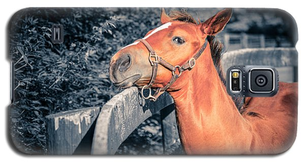 Foal By The Fence Galaxy S5 Case