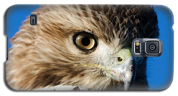 Hawk Eye Galaxy S5 Case by Stephen Flint