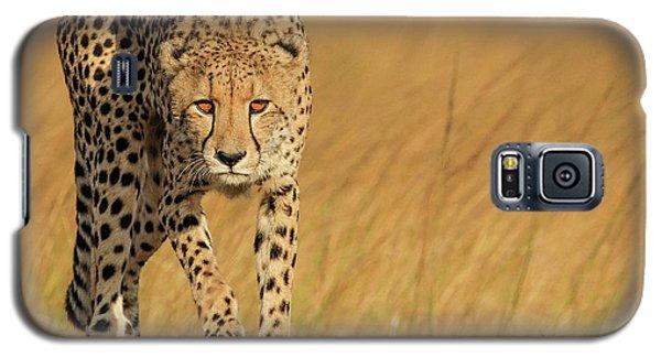 Cheetah Galaxy S5 Case - Focused Intensity by Jaco Marx
