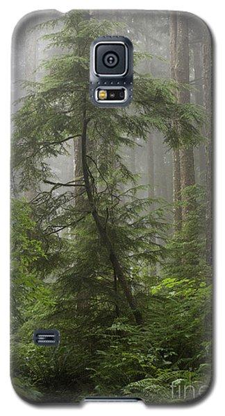 Foggy Woods Galaxy S5 Case