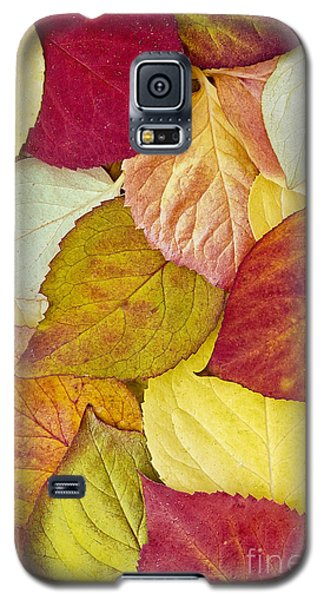 Foliage Quilt Galaxy S5 Case by Alan L Graham
