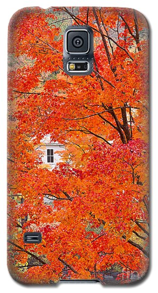 Galaxy S5 Case featuring the photograph Foliage Window by Alan L Graham