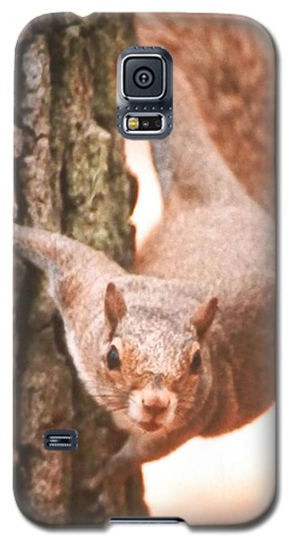 Is It Safe To Come Down Galaxy S5 Case by Belinda Lee