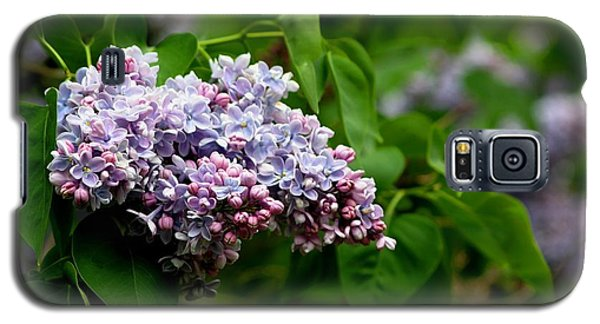 For The Love Of Lilac Galaxy S5 Case by Living Color Photography Lorraine Lynch