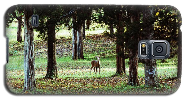 Forest Buck Galaxy S5 Case